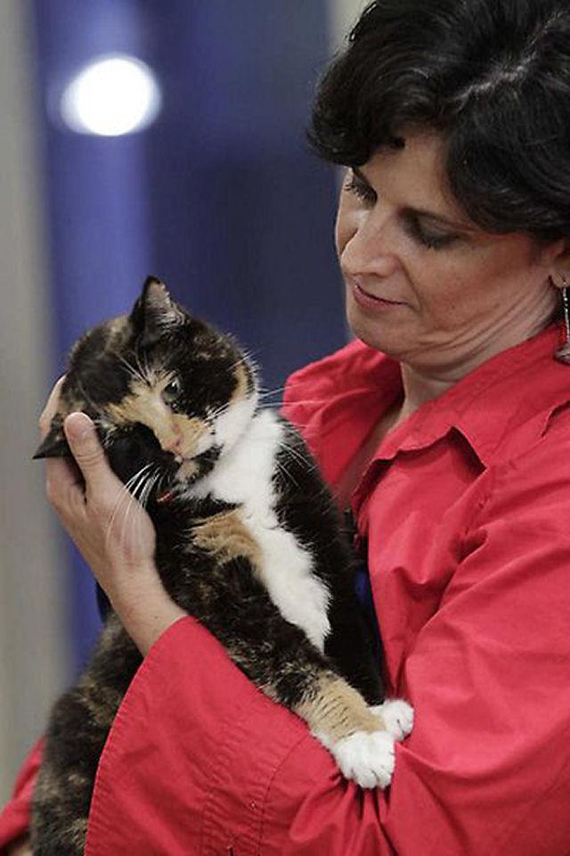 Willow, a gata que voltou para casa depois de 5 anos 11