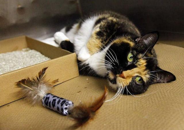 Willow, a gata que voltou para casa depois de 5 anos 12