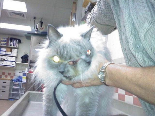 Um gato com duas caras 03