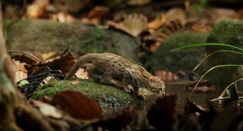 O menor gato do mundo é ridiculamente fofo e temos fotos para provar 03