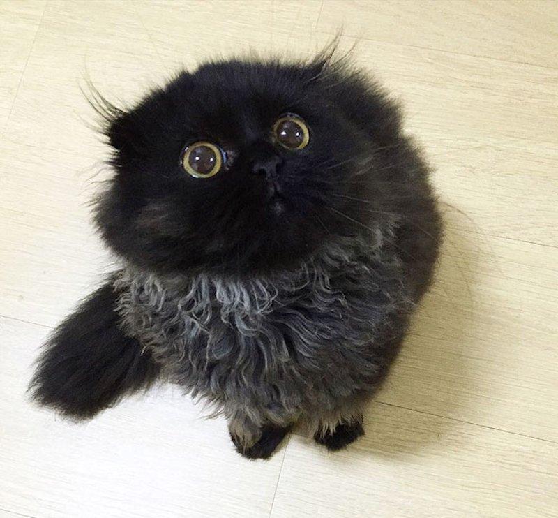 Este é Gimo, o gato com os maiores olhos que você já viu 02