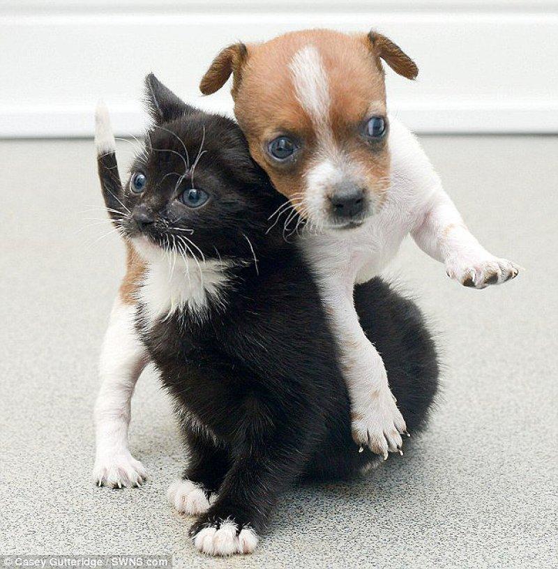 Filhotes de cão e gato acham que são irmãos 02