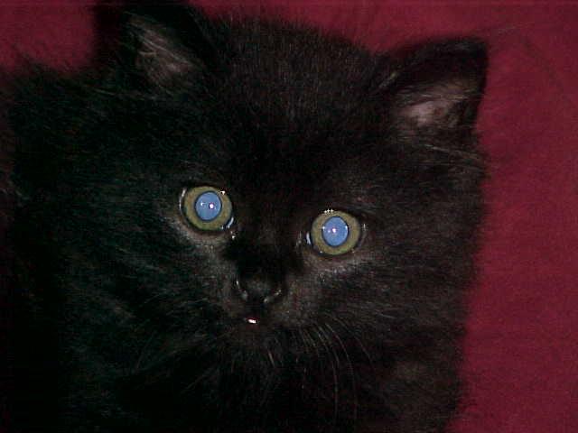Meu gato Reynaldo 01