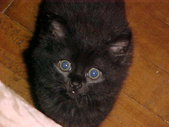 Meu gato Reynaldo 02