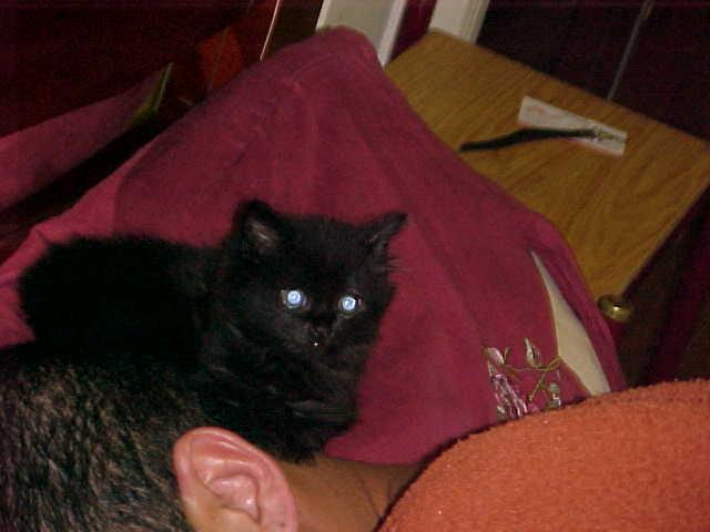 Meu gato Reynaldo 03