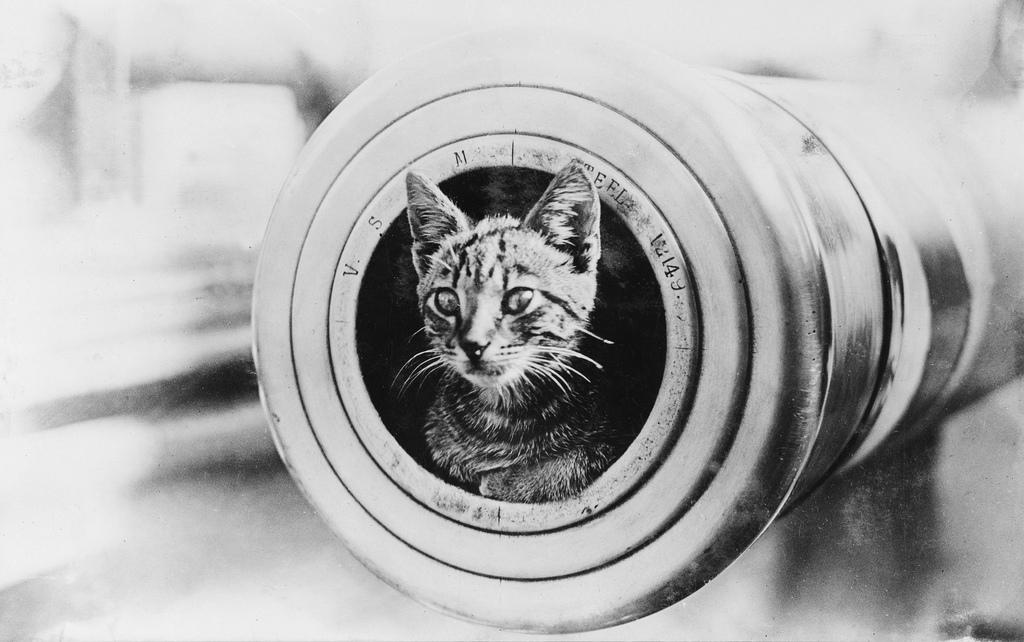 Gatos marinheiros 02