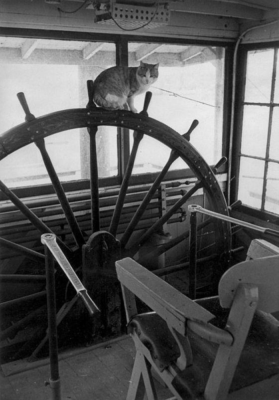 Gatos marinheiros 04