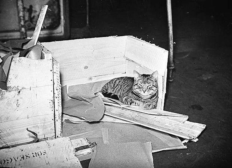 Gatos marinheiros 06