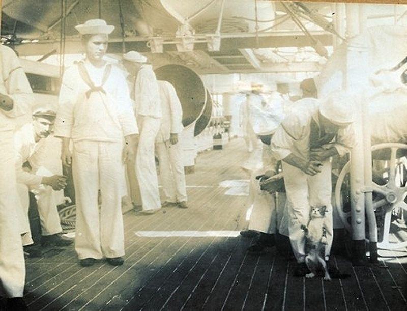 Gatos marinheiros 07
