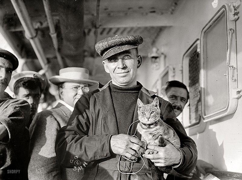 Gatos marinheiros 08