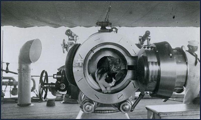 Gatos marinheiros 12