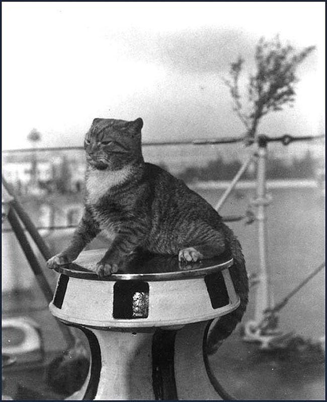 Gatos marinheiros 15