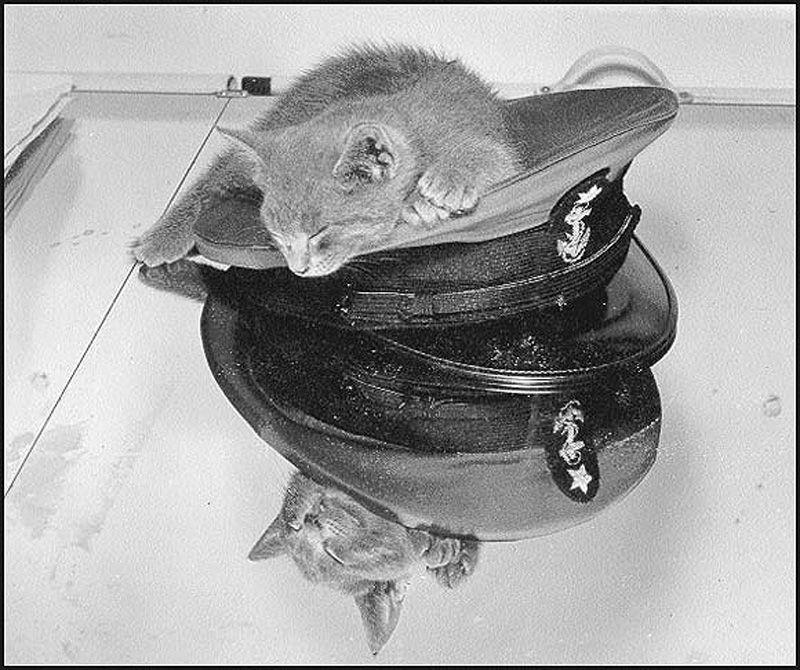 Gatos marinheiros 16
