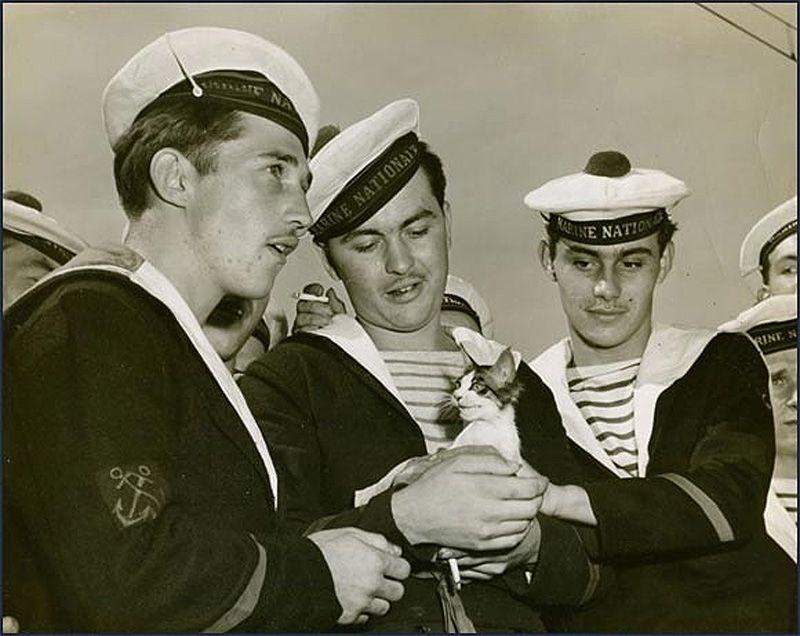 Gatos marinheiros 17