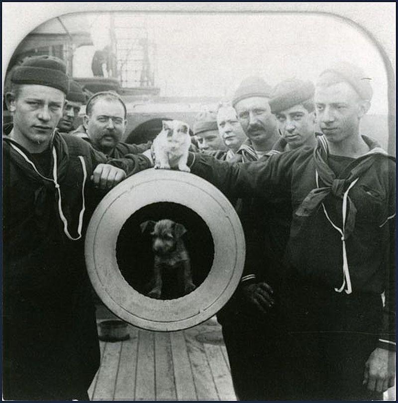 Gatos marinheiros 19