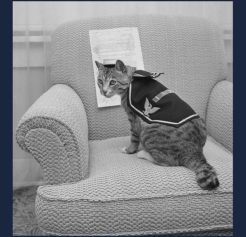 Gatos marinheiros 21