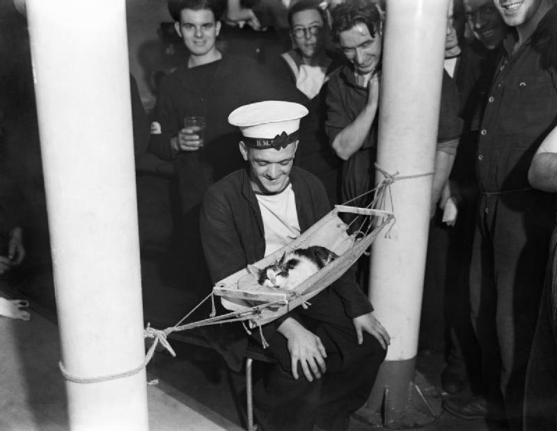 Gatos marinheiros 23