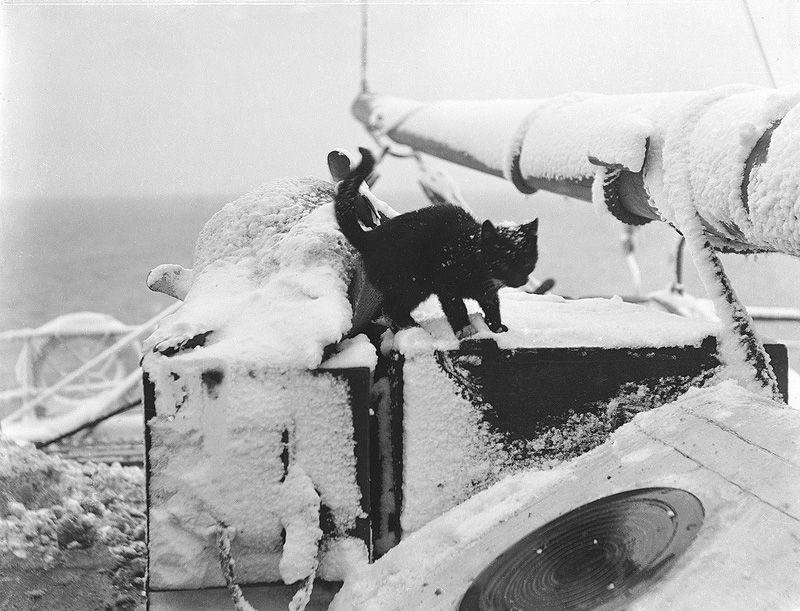 Gatos marinheiros 24
