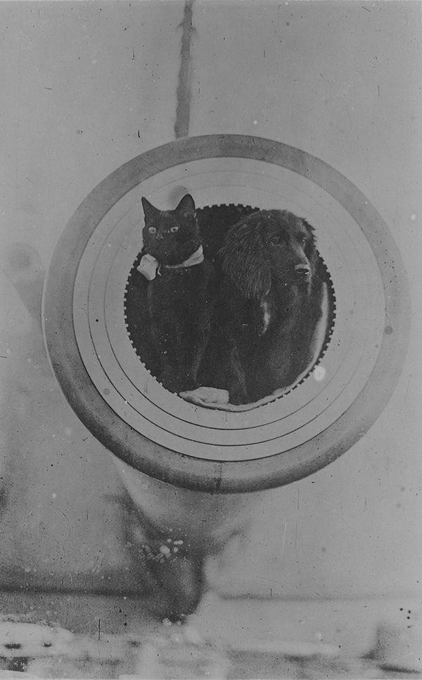 Gatos marinheiros 26
