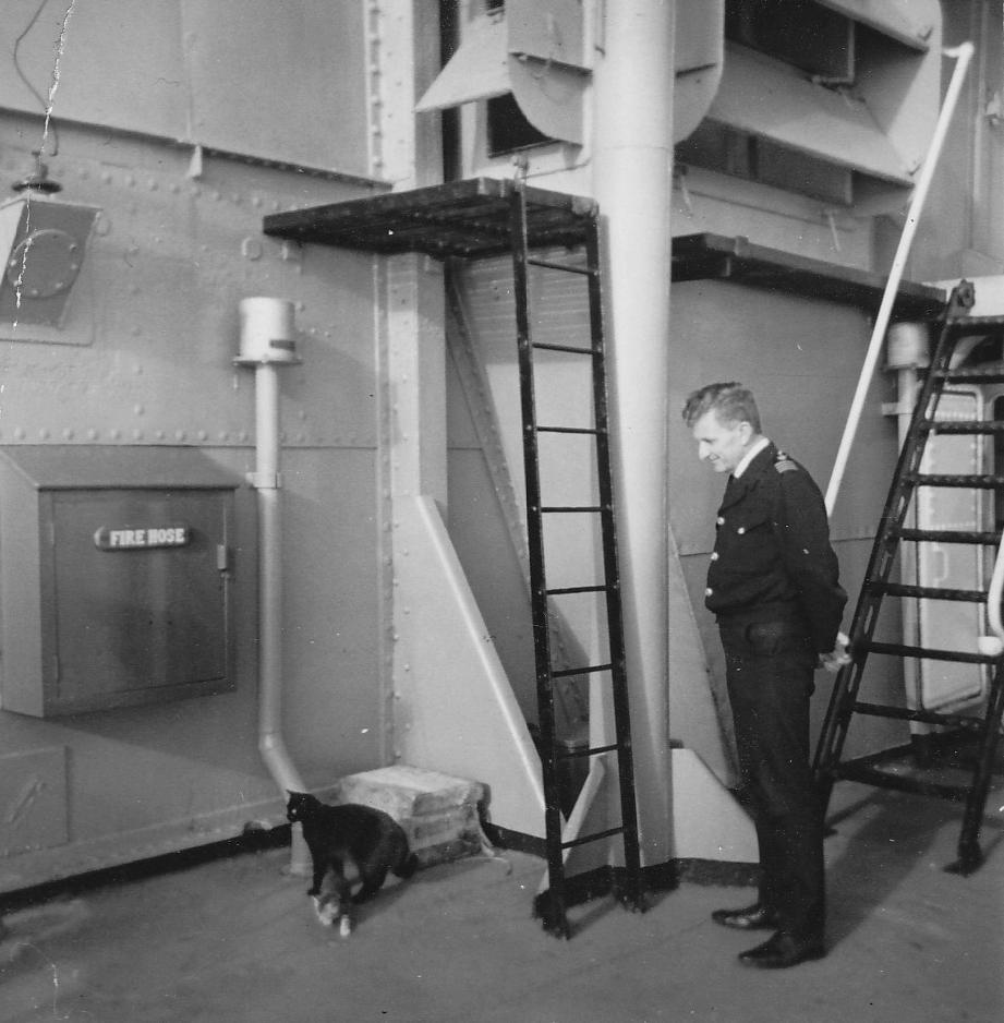 Gatos marinheiros 30