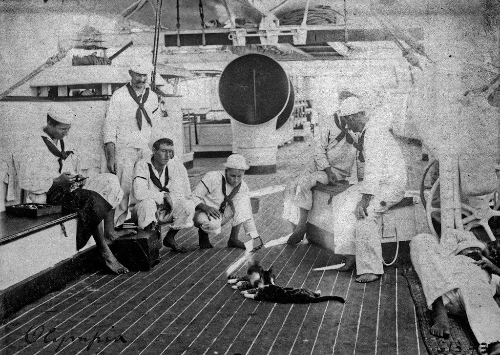 Gatos marinheiros 34