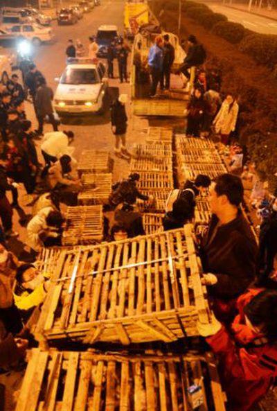 Volunt�rios resgatam 1000 Gatos do abate na China depois de acidente de caminh�o 04