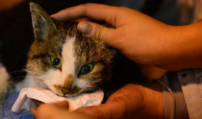 Volunt�rios resgatam 1000 Gatos do abate na China depois de acidente de caminh�o 05