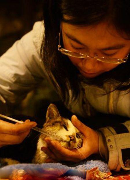 Volunt�rios resgatam 1000 Gatos do abate na China depois de acidente de caminh�o 09