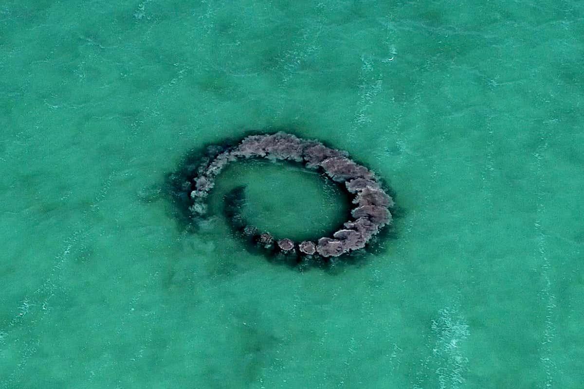 Imagens incríveis vistas de cima mostram golfinhos fazendo anéis de lama para capturar e caçar peixes