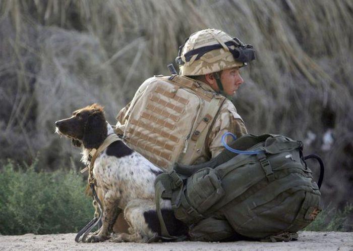 Os melhores amigos dos soldados 03