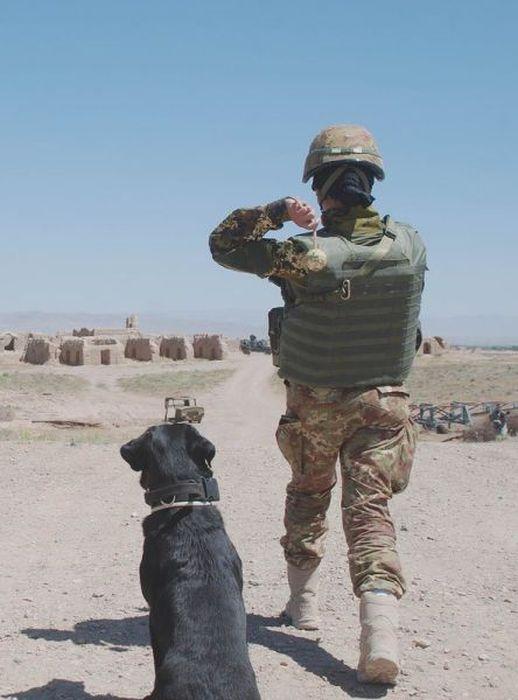 Os melhores amigos dos soldados 24