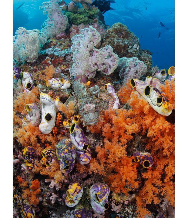 A arte do mimetismo e da camuflagem da fauna marinha 02