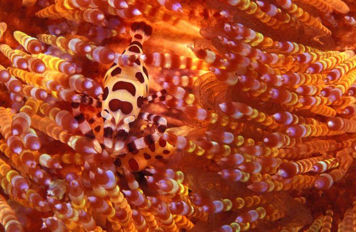 A arte do mimetismo e da camuflagem da fauna marinha 03
