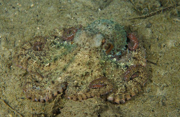 A arte do mimetismo e da camuflagem da fauna marinha 11