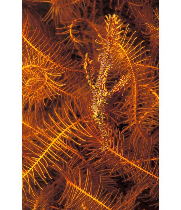 A arte do mimetismo e da camuflagem da fauna marinha 14