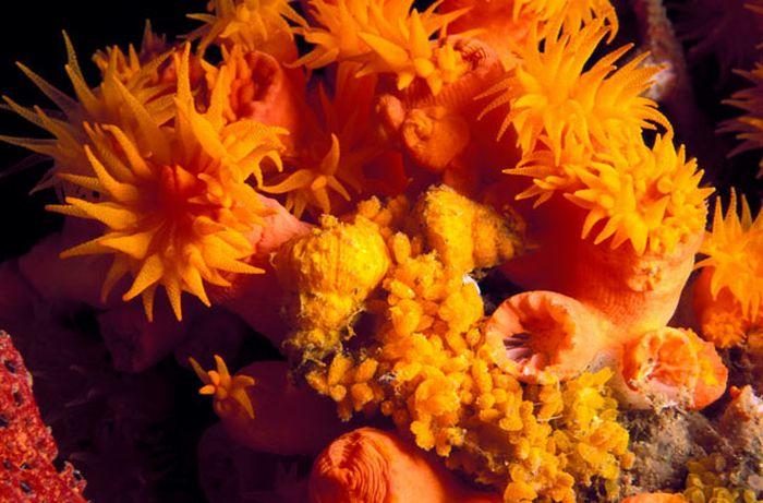 A arte do mimetismo e da camuflagem da fauna marinha 17