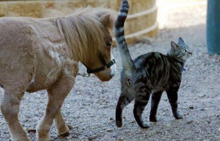 Koda,o menor cavalo do mundo 07