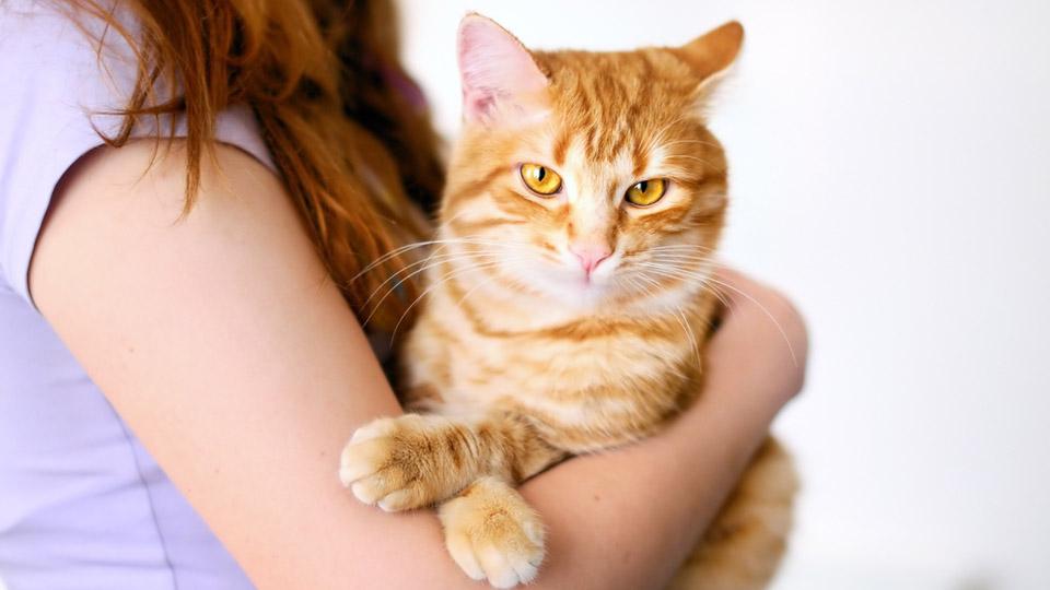 Mulheres que vivem com gatos são mais proclives ao suicídio, revela estudo