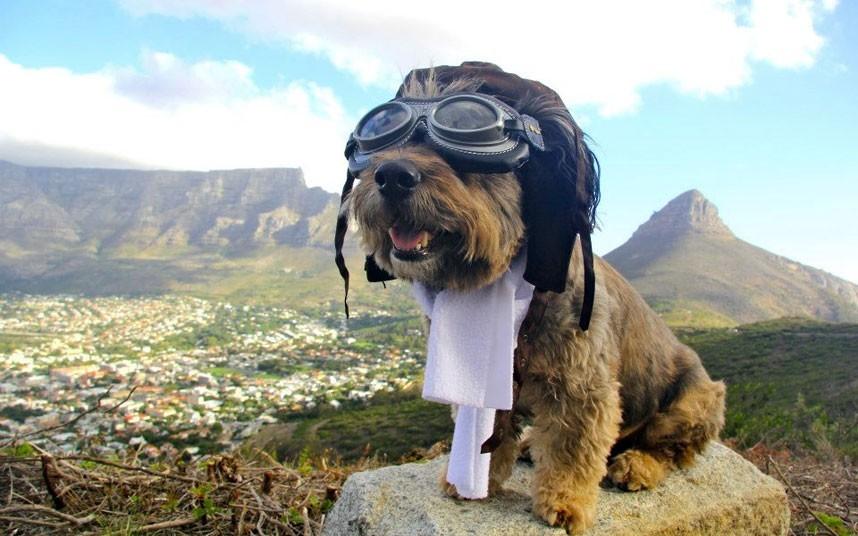 As belas aventuras de Oscar, o cão viajante 01