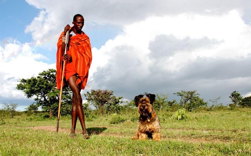 As belas aventuras de Oscar, o cão viajante 02