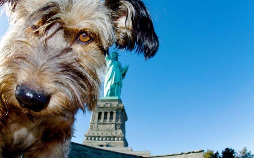 As belas aventuras de Oscar, o cão viajante 07