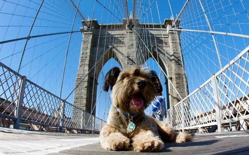 As belas aventuras de Oscar, o cão viajante 08
