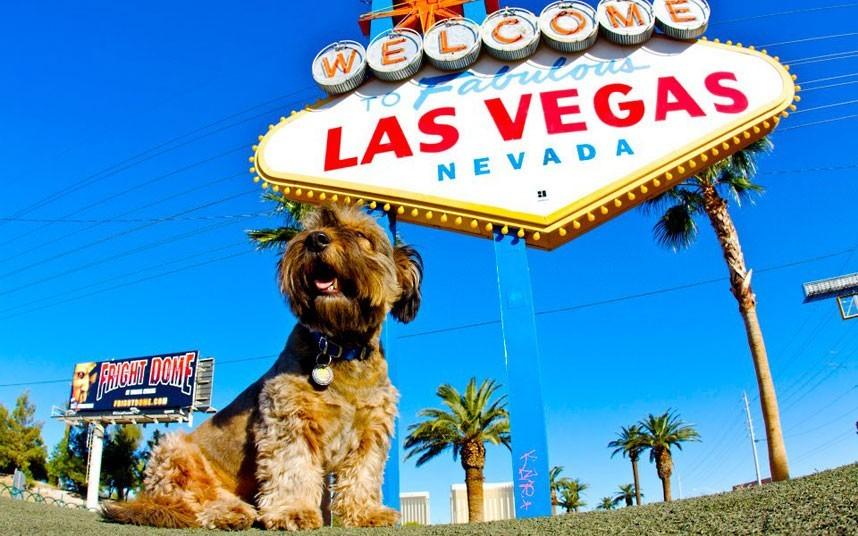 As belas aventuras de Oscar, o cão viajante 09