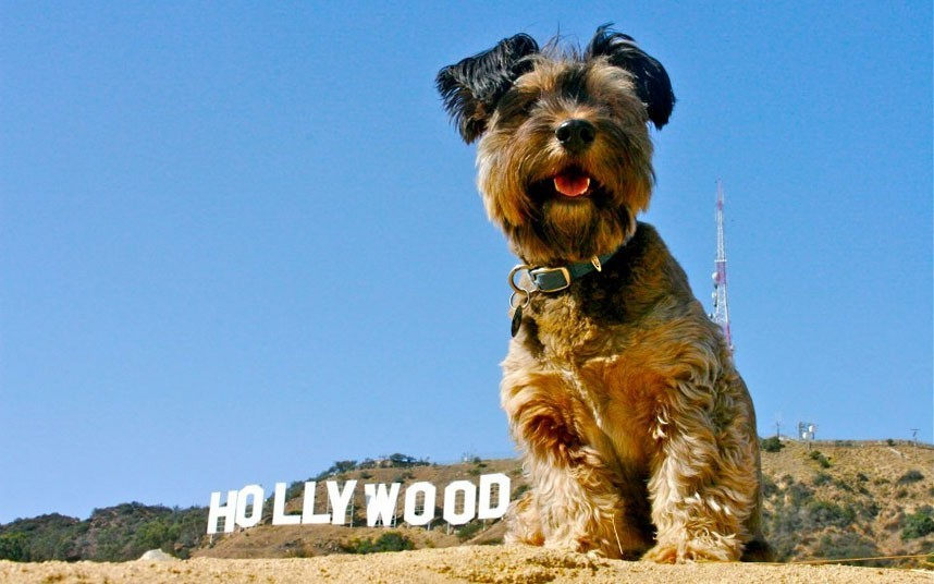As belas aventuras de Oscar, o cão viajante 11