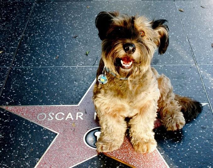 As belas aventuras de Oscar, o cão viajante 12