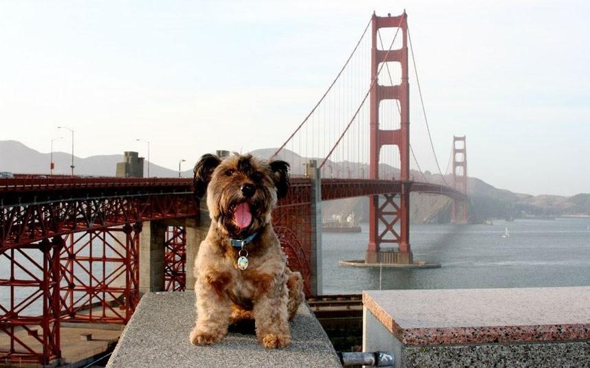 As belas aventuras de Oscar, o cão viajante 13