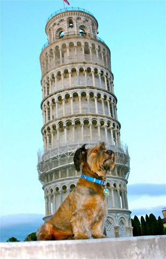As belas aventuras de Oscar, o cão viajante 17