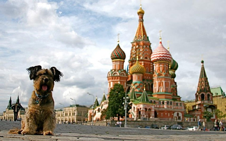 As belas aventuras de Oscar, o cão viajante 18