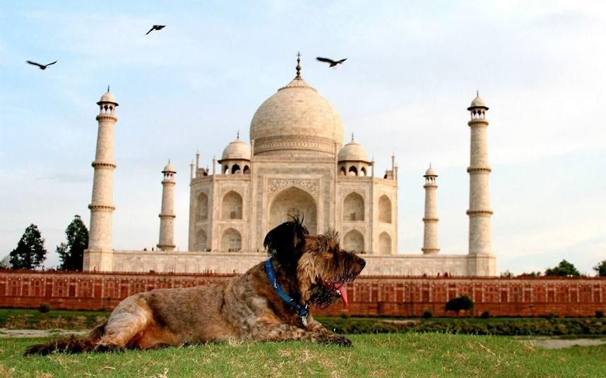 As belas aventuras de Oscar, o cão viajante 20