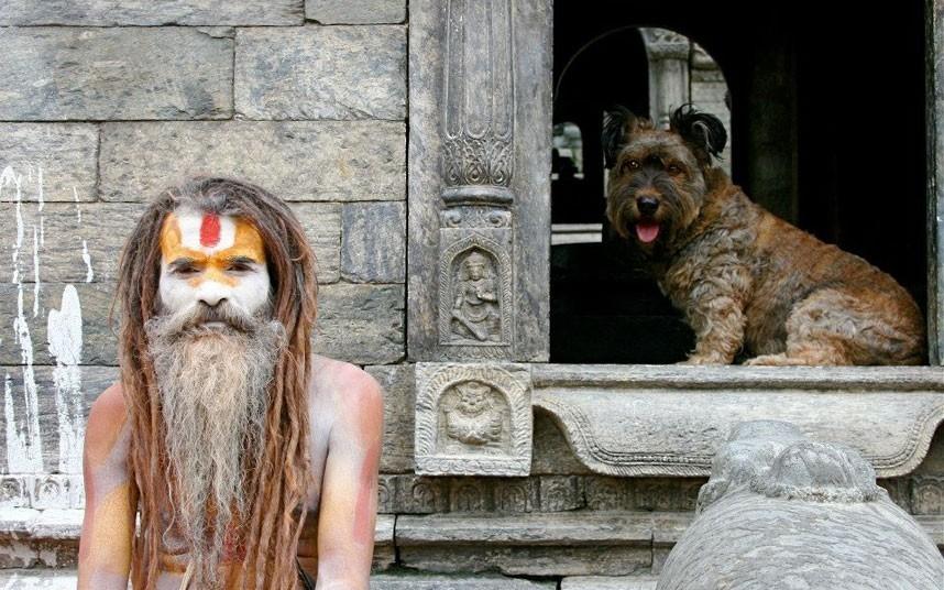 As belas aventuras de Oscar, o cão viajante 21